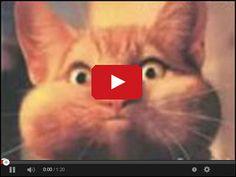 Śmieszne koty w serwisie www.smiesznefilmy.net tylko tutaj: http://www.smiesznefilmy.net/smieszne-koty
