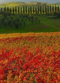 The colors of Tuscany, Italy