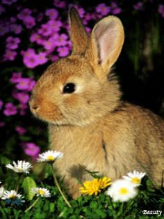 Bunny in the Springtime cute spring animals rabbit flowers bunny springtime Tier Wallpaper, Animal Wallpaper, Rabbit Wallpaper, Nature Wallpaper, Mobile Wallpaper, Animals And Pets, Baby Animals, Cute Animals, Spring Animals