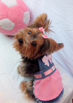 Ideas Pet Clothes Pictures For 2019 Yorkie Clothes, Cute Dog Clothes, Small Dog Clothes, Teacup Yorkie, Yorkie Puppy, Yorkshire Terrier Dog, Yorkshire Dog, Dog Suit, Pet Dogs