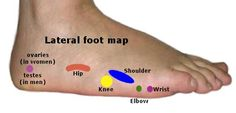 Reflexology Chart - Lateral Foot Map