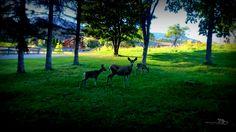 Oh Deer by Guy Hoffman on 500px