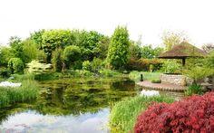 jan boomkamp gardens - Поиск в Google