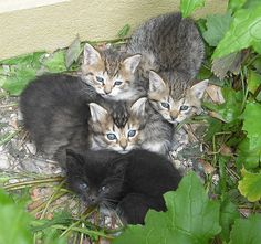 Kittens that used to live in a shed where I worked. Living In A Shed, Feral Kittens, Beautiful World, Cute Kittens, Beautiful Things