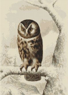 Boreal Owl Cross Stitch Pattern, Edouard Travies, Instant Download Counted Cross Stitch Chart