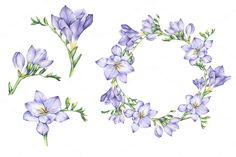 Set of Watercolor Freesia Flowers by Imaginasty on @creativemarket