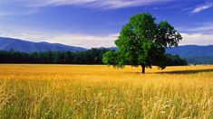 nature-<b>landscape</b>-beautiful-photos-best-desktop-<b>landscape</b>-hd-wallpapers ...