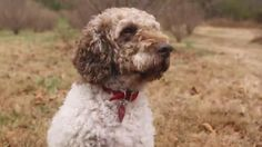 Meet Tom. He's sniffing out America's truffle potential. And, he's as talented as he is cute: http://cnn.it/1vFTXnj