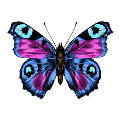 Purple butterfly with open wings top view, the symmetrical drawing,. Purple Butterfly Tattoo, Butterfly Drawing, Butterfly Painting, Butterfly Wallpaper, Butterfly Wings, Beautiful Bugs, Beautiful Butterflies, Butterfly Pictures, Colour Images