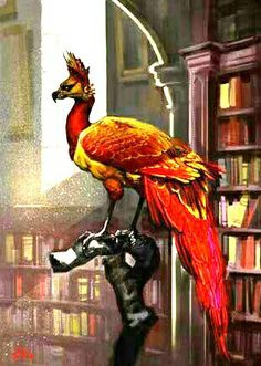 Harry Potter  Fawkes The Phoenix
