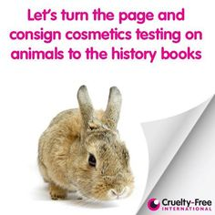 Will South Korea Be the Next Country to Beat the United States in Ending Cosmetics Testing on Animals?