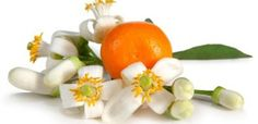 10 AMAZING BENEFITS AND USES FOR ORANGE BLOSSOM WATER