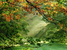 Woodland Garden, Westonbirt Arboretum, Gloucestershire by Mark Bolton. Photographic print from Art.com.