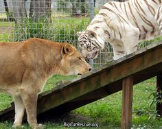 What do YOU THINK Cameron and Zabu are saying?