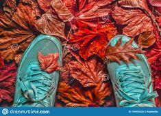 Autumn Walk On The Purple Red Autumn Fallen Leaves Stock Photo - Image of activity, orange: 159955620 Pictures For Sale, Autumn Walks, Walk On, Autumn Leaves, Stock Photos, Purple, Fall, Red, Autumn