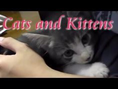 子猫動画&猫画像♪猫ニャーゴyoutube Cat Video,Cats and kittens