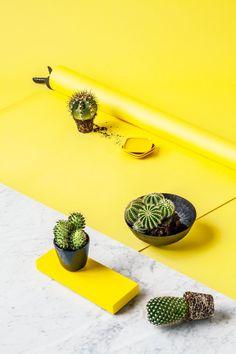 Sanna Luhaniemi / Yellow + cactus Cactus, Planter Pots, Stylists, Stud Earrings, Interior, Yellow, Ear Gauge Plugs, Design Interiors, Stud Earring