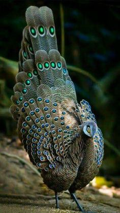 Beautiful colors ➰ #animals