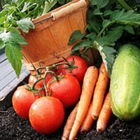 Want to start a vegetable garden? If you're living on a homestead, a vegetable garden is a great way to grow your own food and build some self-sufficiency! These are the 5 easiest vegetables to grow, plus some helpful gardening tips for beginners. Vegetable Planting Guide, Starting A Vegetable Garden, Home Vegetable Garden, Planting Vegetables, Veggie Gardens, Planting Seeds, Easy Vegetables To Grow, Organic Vegetables, Veggies