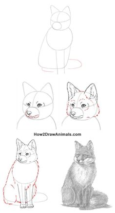 How to draw a sitting fox Fox Drawing Easy, Easy Animal Drawings, Art Drawings For Kids, Pencil Art Drawings, Animal Sketches, Amazing Drawings, Realistic Drawings, Art Drawings Sketches, Easy Drawings