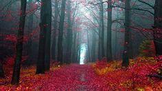 Black Forest Tourism, Germany - Next Trip Tourism