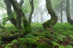 Ancient forest 'Dvorský les' near Horni Marsov, Krkonose.