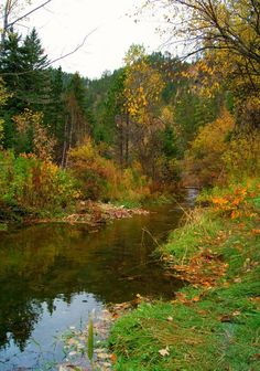 #Fall #Blackhills #leaves Fall in the Black Hills of South Dakota