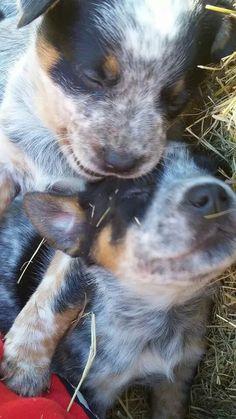 Two cuties, so sweet.