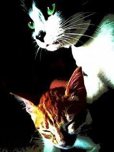 Mis gatos ^^  ((my cats xdd))