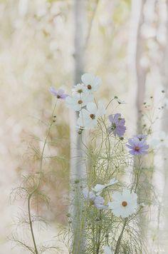 arha-blossom