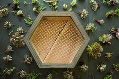 Succulent Wall Planter, Vertical Wall Planters, Cedar Planters, Hanging Succulents, Planter Boxes, Hanging Planters, Picture Wall, Picture Frames, Artificial Silk Flowers