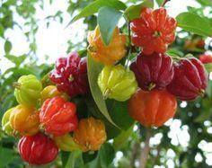 Sorvetes de frutas brasileiras   Universo Agro