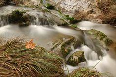 Sycamore Leaf & Stream by Emrah Durtlu on 500px