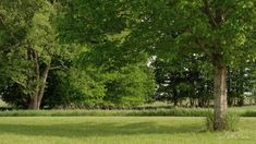 Krásná Keltská hudba Relaxační s Natural Sounds odpočinek, spánek, lázní... Ayurveda, Relax, Country Roads, Youtube, Plants, Fitness, Women, Gymnastics, Women's