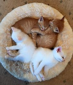 a bowl of cats