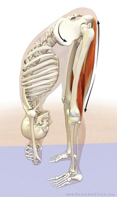 Hamstrings releasing in uttanasana Also releases stress in lower back. Remember to breath! #exercise#running