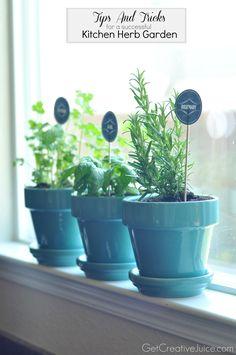Herb Gardening Tips and Tricks to Maintaining an Indoor Kitchen Herb Garden - Creative Juice Herb Garden In Kitchen, Kitchen Herbs, Kitchen Gardening, Garden Plants, Indoor Plants, Indoor Herbs, Potted Plants, Container Gardening, Gardening Tips
