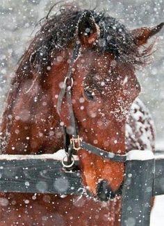 Snow!! Love this horse