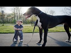 What a Loyal Dog! It Doesn't Allow Anything to Hurt the Baby   Dog Love Baby Video Compilation - YouTube
