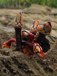 Goose barnacles, also called stalked barnacles or gooseneck barnacles, are filter-feeding crustaceans that live attached to hard surfaces of rocks and flotsam in the ocean intertidal zone