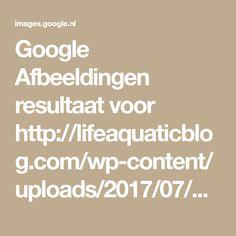 Google Afbeeldingen resultaat voor http://lifeaquaticblog.com/wp-content/uploads/2017/07/Man-Cave-Ideas-For-Basement.jpg
