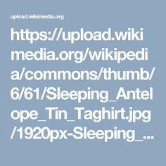 https://upload.wikimedia.org/wikipedia/commons/thumb/6/61/Sleeping_Antelope_Tin_Taghirt.jpg/1920px-Sleeping_Antelope_Tin_Taghirt.jpg