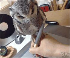 owl writing accessory