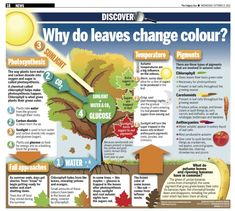 6 - Why Do Leaves Change Color