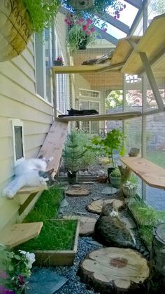 catio cat enclosure cats lounging interior haven c. catio cat enclosure cats lounging interior haven catiospaces Animal Room, Outdoor Cat Enclosure, Diy Cat Enclosure, Garden Enclosure Ideas, Dog Enclosures, Reptile Enclosure, Cat Grass, Cat Garden, Garden Care