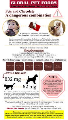 theobromine dog