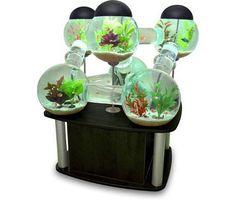 silverfish-aquarium