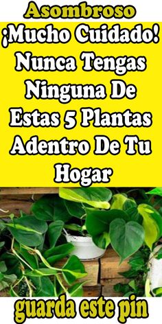 Salvia Divinorum, Salvia Officinalis, Herbs, Tips, Food, Native Plants, Medicinal Plants, Country Primitive, Empty Wine Bottles