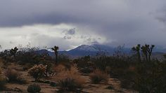 Joshua Tree, Ca March 2014 view of Snowy Big Bear, Ca in background