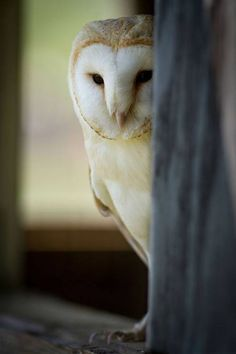 What a handsome owl! :)  (Courtesy of Old Moss Woman's Secret Garden via Facebook)